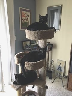 Image of Marie's Cats